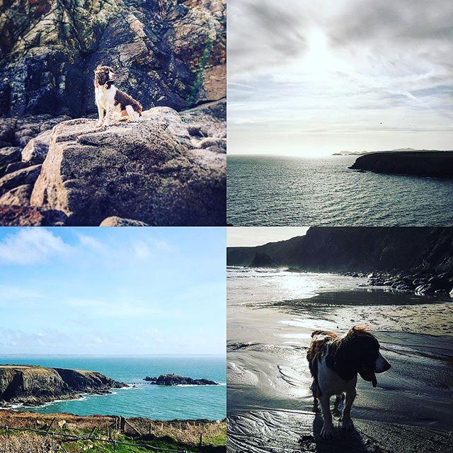 Dogs enjoying Caerfai Bay beach